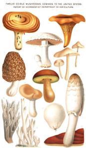 Friendly Fungi. [PD] Wikkimedia