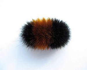 Pyrrharctia isabella: Wikimedia