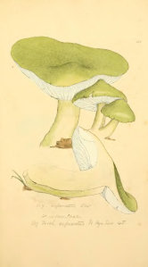 Coloured_Figures_of_English_Fungi_or_Mushrooms_-_t._126